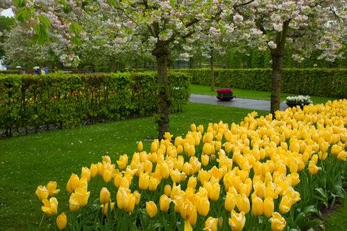 Keukenhoff Garden