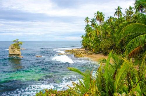 Vegetación en isla del Coco