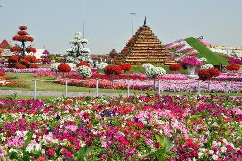 Los campos de flores más hermosos: pura inspiración