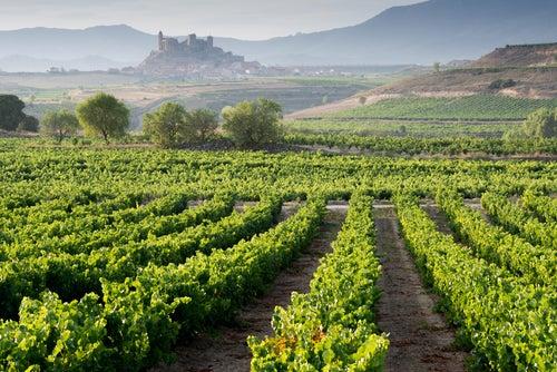 Vamos a conocer la cultura del vino ¡Nos vamos de bodegas!