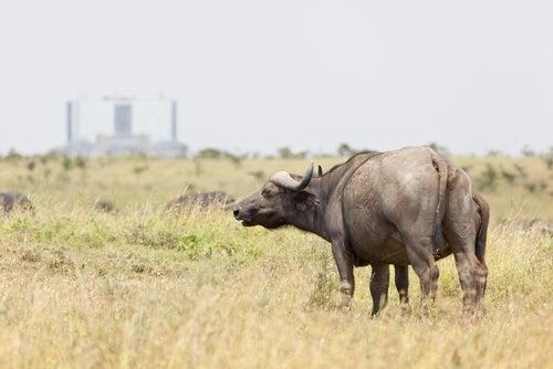 Animales en el PArque Nacional de Nairobi