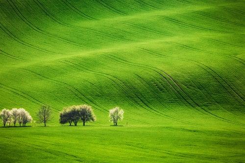 Paisaje del Sur de Moravia