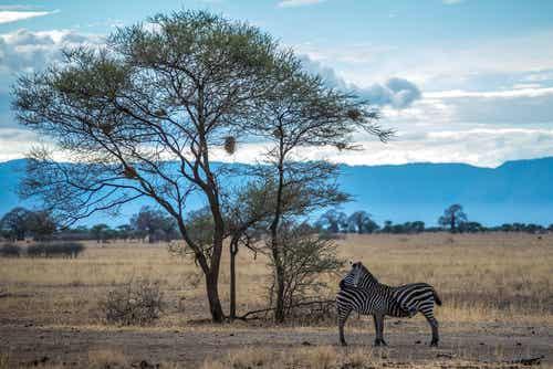 El fantástico Parque Nacional de Nairobi