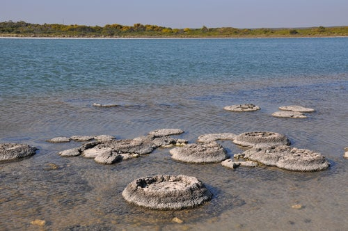 Estromatolitos en Australia