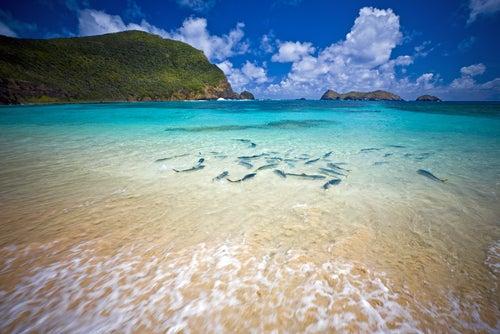 Playa en la Isla de Lord Howe