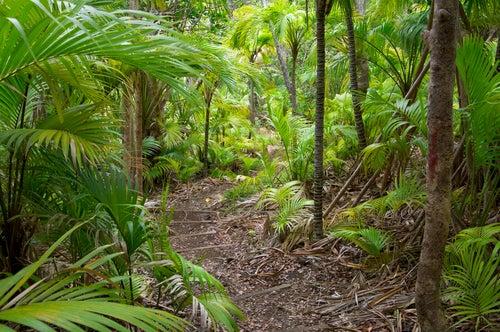 Interior de la isla de Lord Howe