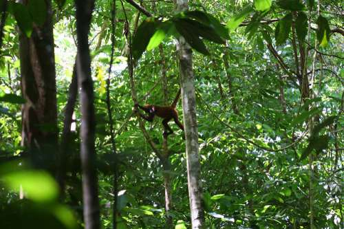 Fauna en la península de Osa