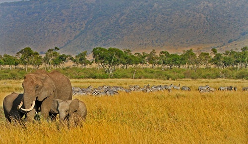 Fauna de Masai Mara