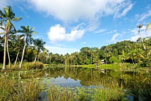 Isla de Pulau Ubin