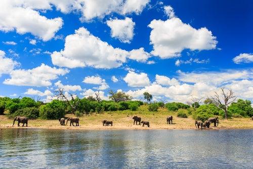 Chobe National Park en Botsuana
