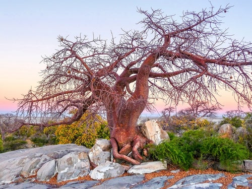 Parque Nacional Makgadikgadi Pans