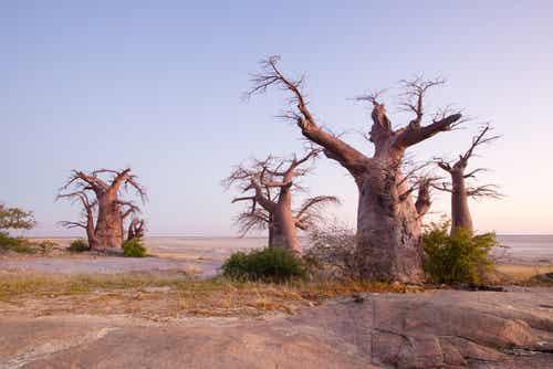 Parque Nacional Makgadikgadi Pans, lo mejor de África