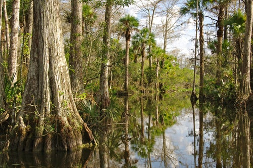 Everglades en Miami