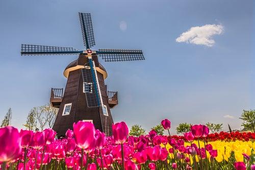 Los molinos holandeses más impresionantes