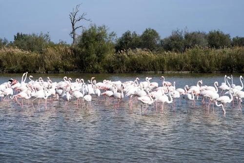 Parque Natural de La Camargue