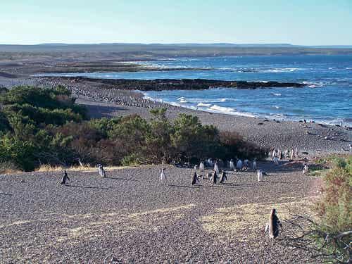 Punta Tombo: pingüinos en Argentina
