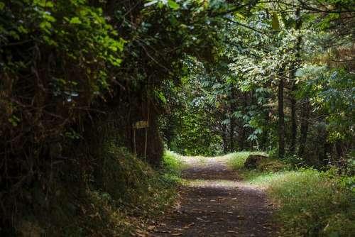 Bosque en Taramundi