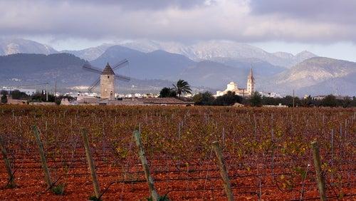 Binissalem en Mallorca