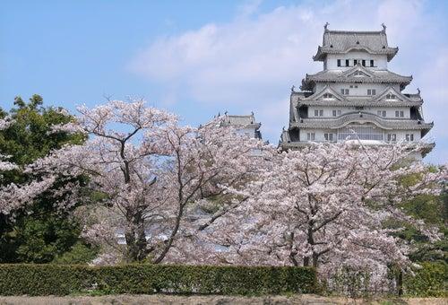 Cerezos en flor, un espectáculo para ver en un viaje a Japón
