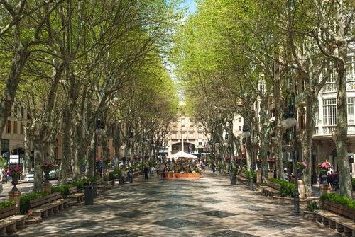 Paseo del Borne en Palma de Mallorca
