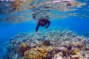 Snorkel en la Gran Barrera de Coral