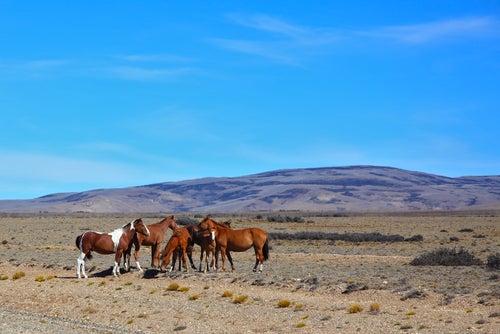Vamos a conocer la increíble Pampa argentina
