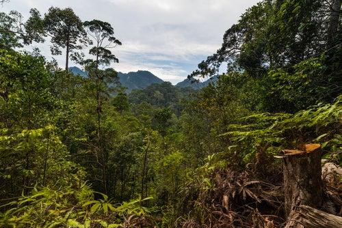 Parque Nacional Lambir Hills en Malasia