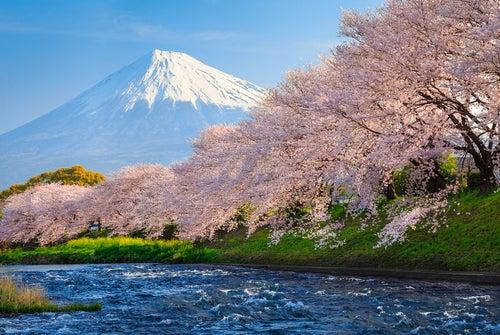 Cerezos en Sakura Japón
