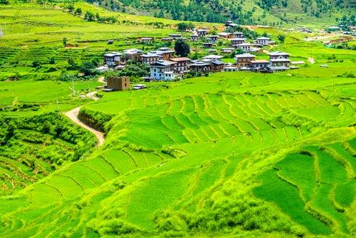 Campos de arroz en Buthán