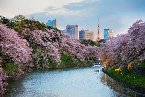 5 cosas que podrás hacer solo en Tokio