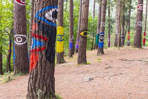 El encanto del Bosque de Oma
