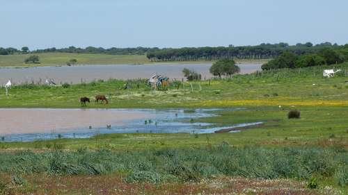 La Reserva Natural Dehesa de Abajo, un paraíso en Andalucía