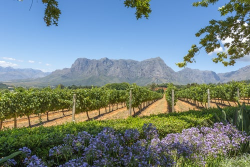 Cape Winelands en Ciudad del Cabo
