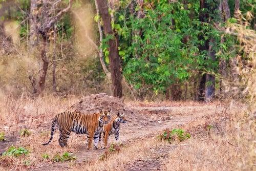 La India a través de los pasos de Mowgli