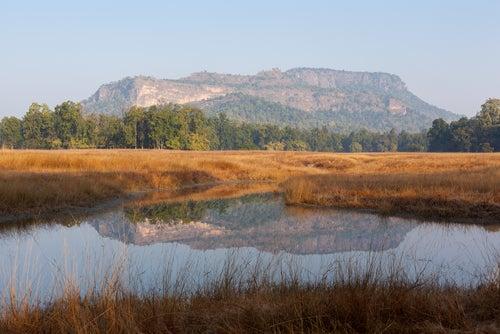 Parque Nacional Bandhavgarh en India