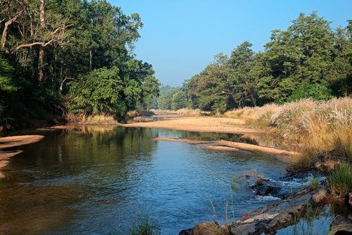 Parque Nacional Kanha en la India
