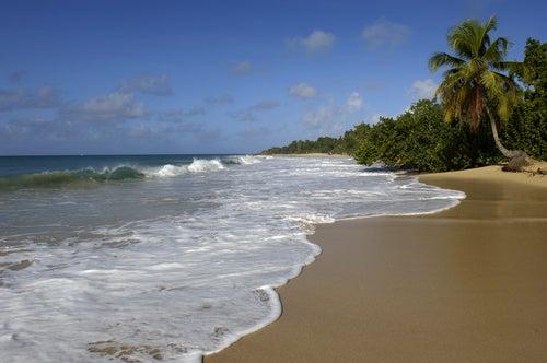 Playa les Salines en Martinica