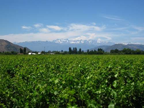 El valle de Colchagua en Chile y su tradición vinícola