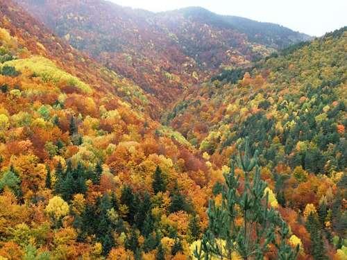 El espectacular bosque de la Pardina del Señor