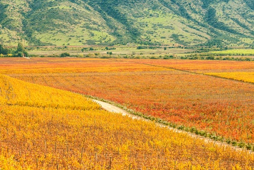 Valle de Colchagua en Chile