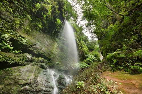 La ruta de los Nacientes de Marcos y Cordero en La Palma