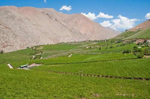 El fantástico valle del Elqui en Chile