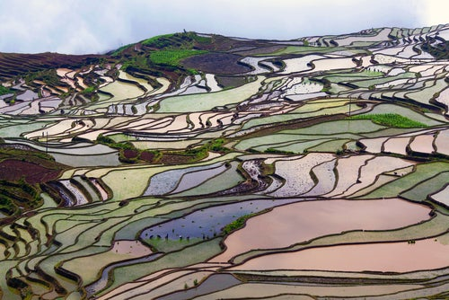Campo de arroz en Yunnan en China