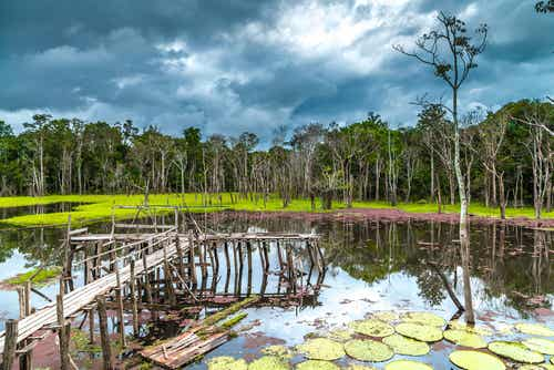 El Pantanal en Brasil, un rincón espectacular