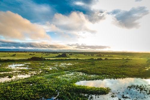 Pantanal en Brasil