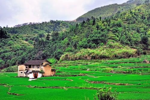 Campos de arroz en Fujian