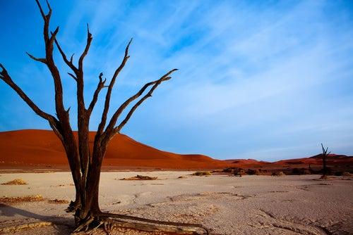 Dead Vlei en Namibia, un paisaje fantasmagórico