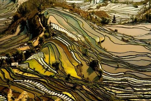 Los campos de arroz en China, paisajes increíbles