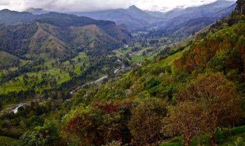Valle de Cocora, Colombia, naturaleza en estado puro