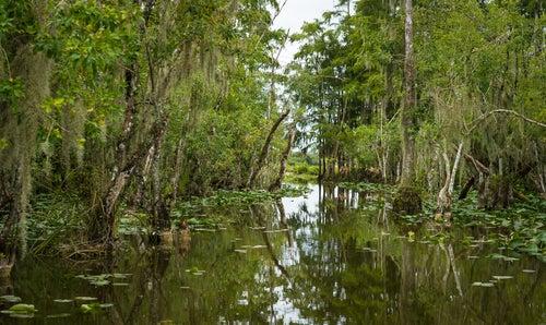 Los misteriosos Everglades de Florida